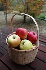 リンゴのオリジナルプリント