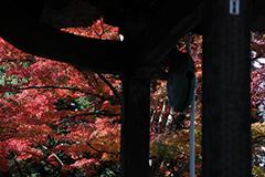 少林山達磨寺のオリジナルプリント