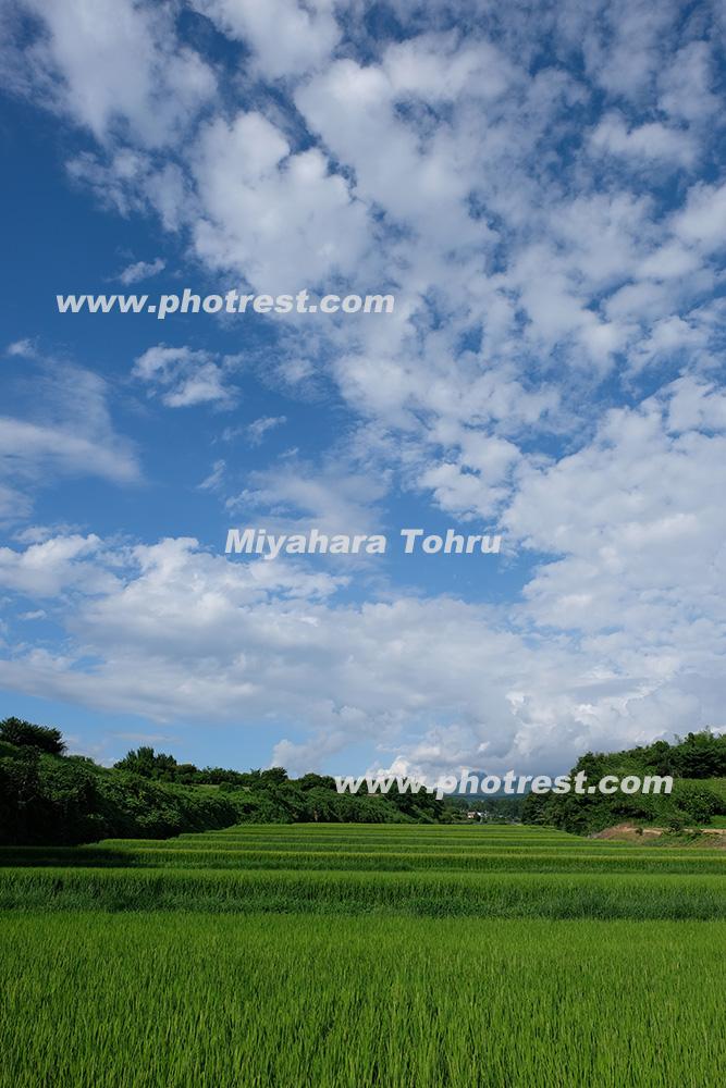 水田の写真素材