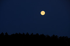 月のオリジナルプリント