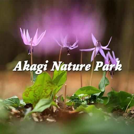 赤城自然園の春のフォトブック