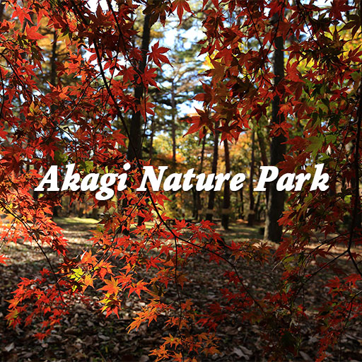 赤城自然園の秋のフォトブック