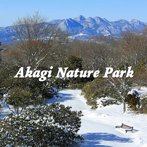 赤城自然園の冬のフォトブック