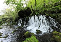新緑の元滝