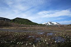 春の尾瀬ヶ原