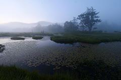 夏の尾瀬ヶ原