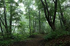 夏の雑木林