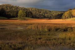 紅葉の大江湿原