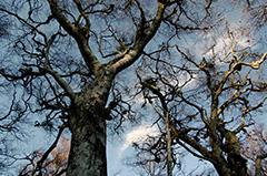 秋のブナ林