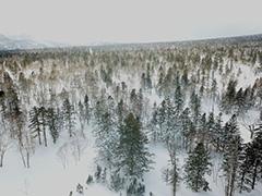 北海道の針広混交林の空撮