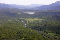 カムチャツカの森の空撮