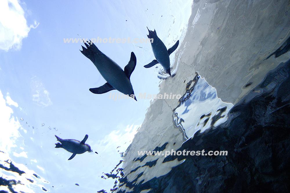 旭山動物園の写真素材