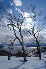 冬のダケカンバ