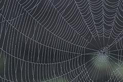 クモの巣の朝露