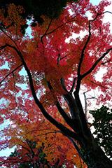 少林山達磨寺の紅葉