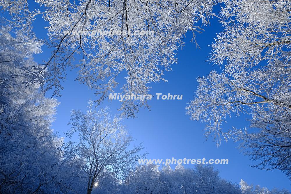 霧氷の写真素材