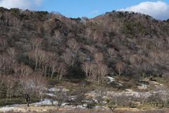 冬の白樺牧場