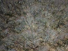 玉原のブナ林の空撮