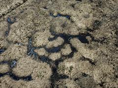 玉原の湿原の空撮
