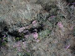 赤城山の森の空撮