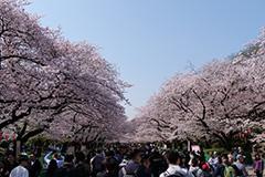 春の上野恩賜公園