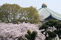 春の北の丸公園