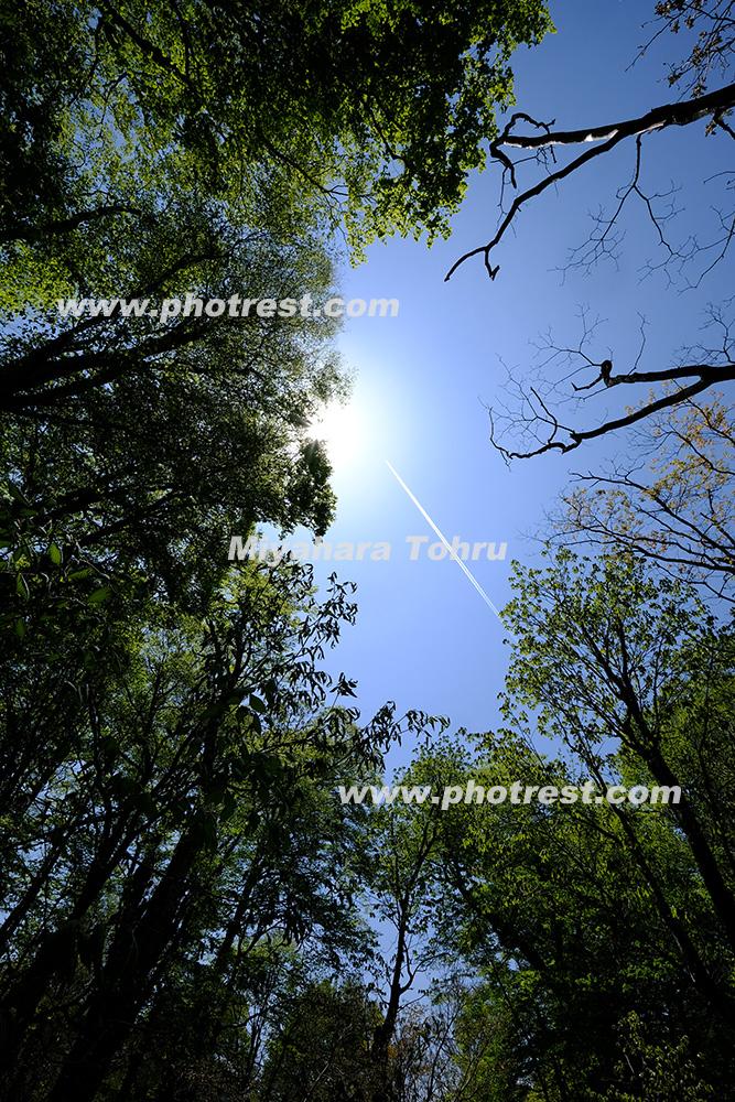 ブナ林の写真素材