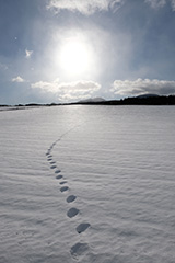 雪原のオリジナルプリント