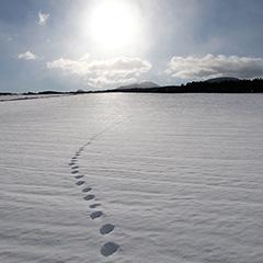雪原のフォト作品
