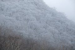 冬の雪景色