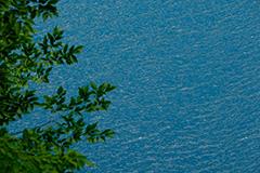 新緑の奥四万湖