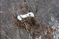 冬のクマ棚