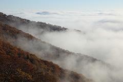 紅葉の雲海