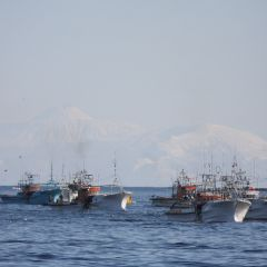 スケソウ漁のフォト作品