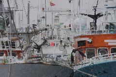 冬の羅臼港