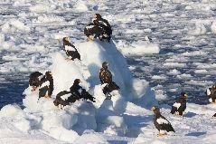 流氷と海ワシ