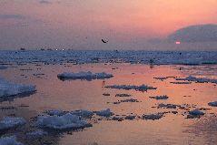 スケソウ漁と流氷