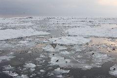 冬の流氷観光船