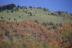 紅葉の八間山
