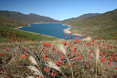 紅葉の野反湖