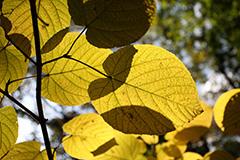 大峰沼の紅葉