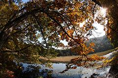 秋の大峰沼