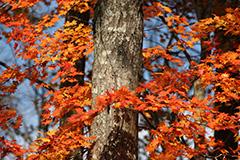 群馬の紅葉