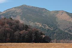 紅葉の尾瀬ヶ原