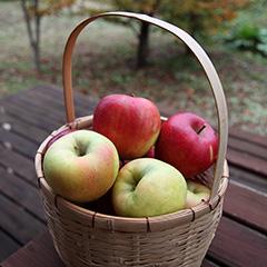 リンゴのフォト作品