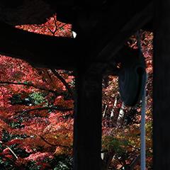 少林山達磨寺のフォト作品