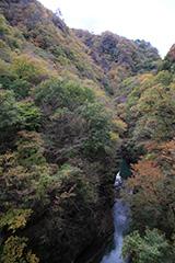 紅葉の吾妻渓谷