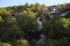 福島の新緑