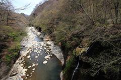 新緑の吾妻渓谷