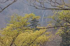 新緑の赤城大滝